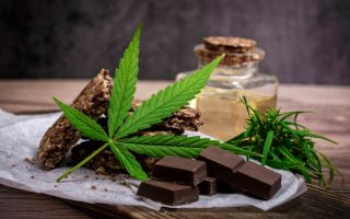 Шоколад с коноплей: воздействие на организм