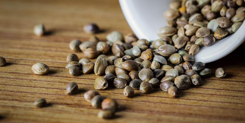 Конопляные семена